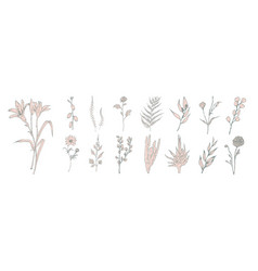 collection of hand drawn pink flowers ferns and vector image