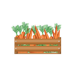 Colorful silhouette of wooden box with carrots vector