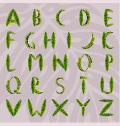 english alphabet made from palm leaves vector image