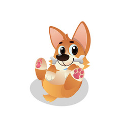 Funny corgi lies on his back with bone in mouth vector