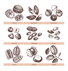 hand drawn nuts collection vector image