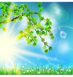 Summer green background with selective focus vector image