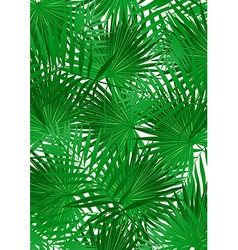 Tropical Cabbage palm on white background vector