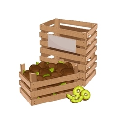 Wooden box full of kiwi isolated vector image