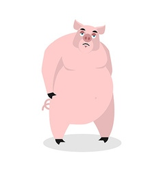 Sad pig big fat boar melancholy sorrowful hog vector
