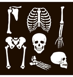 Collection Human Skeleton vector