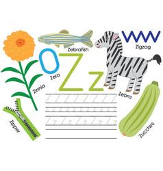 Letter z education for children learning english vector