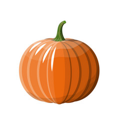 orange pumpkin vegetable vector image
