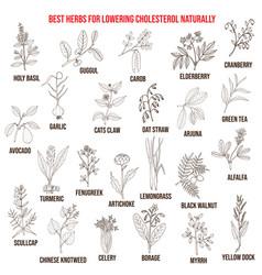 Best medicinal herbs for lowering cholesterol vector