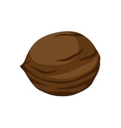 brown walnut icon vector image