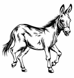Donkey Stylized Drawing vector image