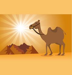 nature sand desert landscape design vector image