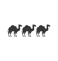Silhouette animal figure of camels flat icon vector