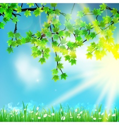 Eco nature green and blue with sunshine vector image