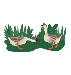 Farming today two african geese vector