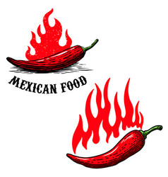 set chilli peppers with flame fire vector image