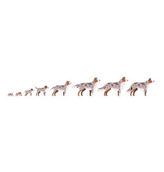 set cute puppy herding dog growth stage vector image