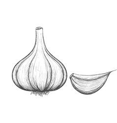 vegetable garlic Stock vector image
