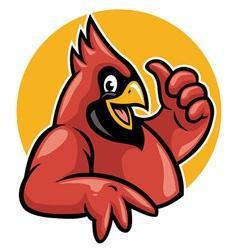 thumb up cardinal vector image vector image