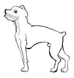 sketch of boxer dog vector image vector image