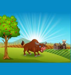 Bull activity at farm in the morning vector