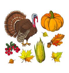 pumpkin and autumn symbols harvest set vector image