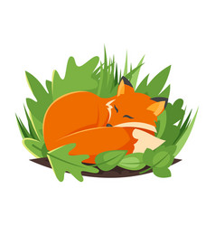 cartoon style of sleeping fox vector image