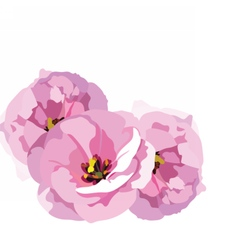 Watercolor Pink Rose flowers isolated vector image