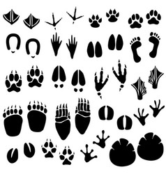 animal footprint track a set animal footprint vector image