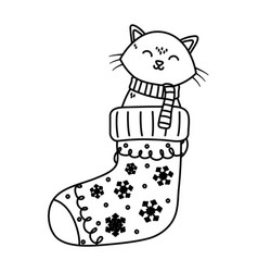 Cat coming out sock celebration merry christmas vector