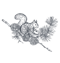 Composition with hand drawn forest squirrel vector