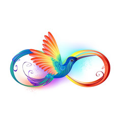 rainbow hummingbird with infinity vector image