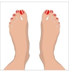 female feet with red pedicure vector image