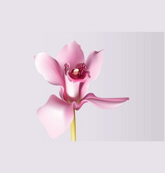 orchid flower background beautiful postcard for vector image