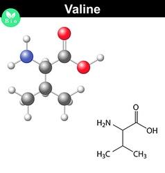 Valine proteinogenic amino acid vector image vector image