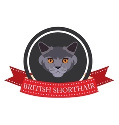 Flat icon pedigreed cat british shorthair vector