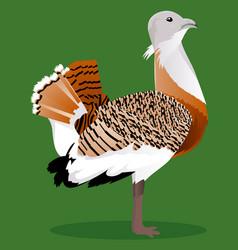 Great bustard cartoon bird vector