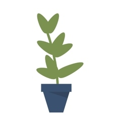 Plant in pot icon vector