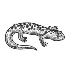 Salamander lizard animal sketch vector