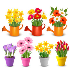 Spring and summer colorful flowers in pots vector