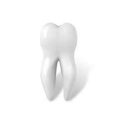 tooth icon realistic teeth isolated on white vector image