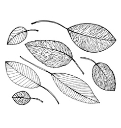 Birds and leaves vector image
