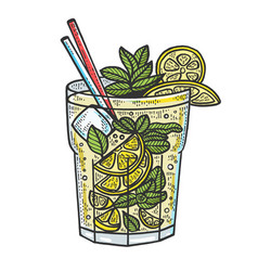 mojito cocktail sketch engraving vector image