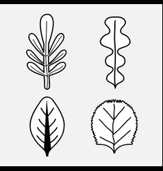 beautiful and natural leaves of plants vector image vector image