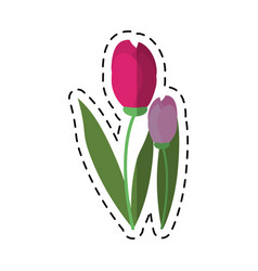 cartoon tulip leaf natural floral vector image