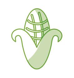 cob corn isolated icon vector image