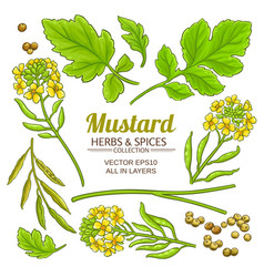 Mustard plant elements isolated vector
