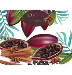 cocoa beans and cinnamon realistic detailed vector image