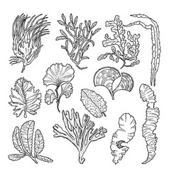 marine sketch with different underwater plants vector image