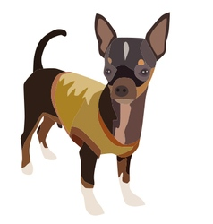 Chihuahua Dog 1 vector image